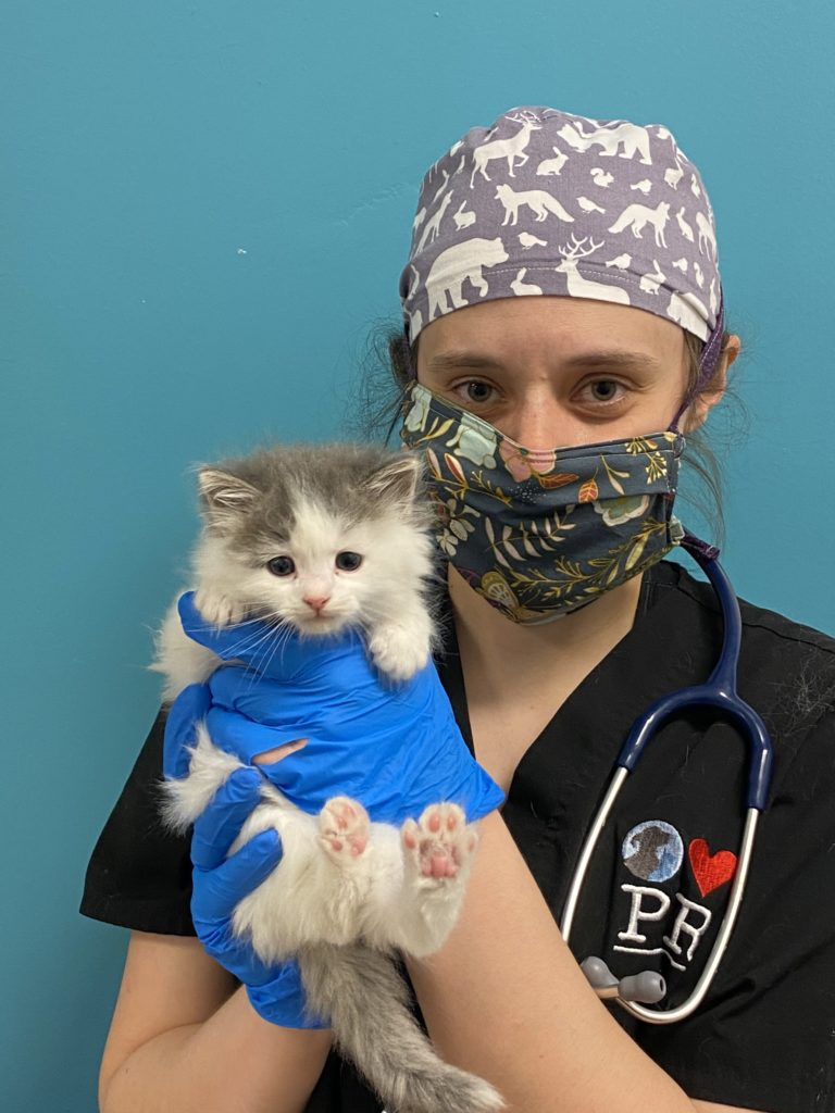 Dr. David with Casper the kitten